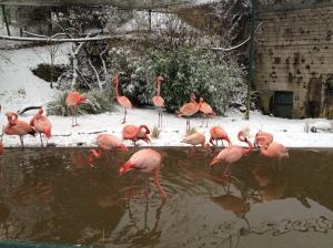 Flamingod naudivad ilma